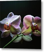 Highlighted Orchids Metal Print