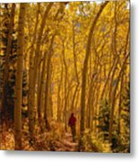 Hiking In Fall Aspens Metal Print