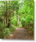 Hiking Trail Through Forest Along Lewis And Clark River Metal Print
