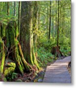 Hiking Trail Through Forest In Lynn Canyon Park Metal Print