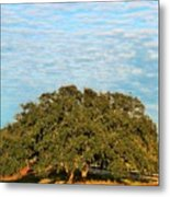 Hill Country Tree  Metal Print