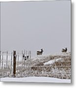 Hills Have Eyes Metal Print