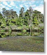 Hillsborough River 1 Metal Print