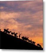 Hillside Elk Metal Print