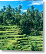 Hillside In Indonesia Metal Print
