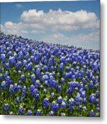 Hillside Texas Bluebonnets Metal Print