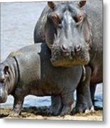 Hippo Metal Print