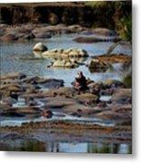 Hippo Raft Metal Print