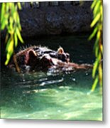 Hippo Metal Print by Thea Wolff