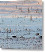 His Eye Is On The Sparrow.. Metal Print