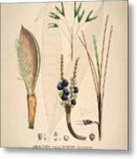 Historia Naturalis Palmarum Metal Print
