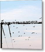 Hitchcock,  The Birds Metal Print
