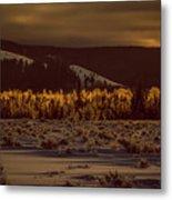 Hoar Frost In Dawn's Light Metal Print