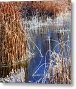 Hoar Frost On Reeds Metal Print