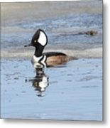 Hodded Merganser With Reflection Metal Print