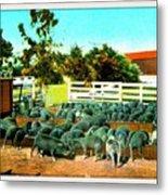 Hog Farm At The Hotel Potter, Santa Barbara Ca, 1905 Metal Print