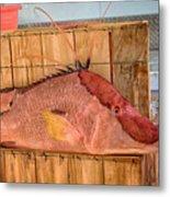 Hog Fish 02 Metal Print
