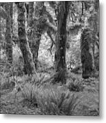 Hoh Rain Forest 3371 Metal Print
