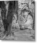 Hoh Rain Forest 3378 Metal Print
