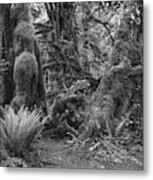 Hoh Rain Forest 3389 Metal Print