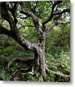 Hold Firm Metal Print