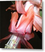 Holiday Cactus - A Full Bloom Metal Print
