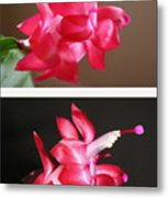 Holiday Cactus - Day And Night Metal Print