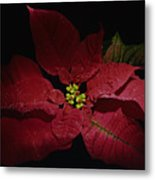 Holiday Poinsettia Metal Print
