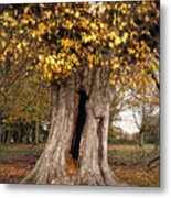 Hollow Tree Metal Print