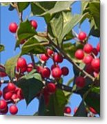 Holly Berries On A Wintry Day I Metal Print