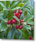 Holly Berries Metal Print
