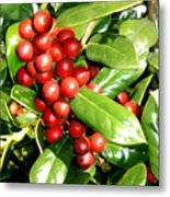 Holly In Summer Metal Print