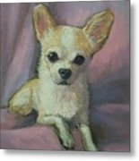 Holly The Chihuahua Metal Print