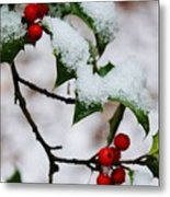 Holly Tree And Snow Metal Print