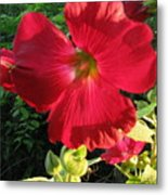 Hollyhock Metal Print