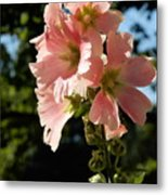 Hollyhocks 1 2017 Metal Print