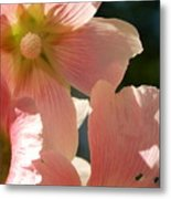Hollyhocks 5 2017 Metal Print