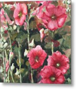 Hollyhocks Along The Fence Metal Print
