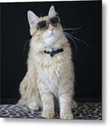 Hollywood Cat Metal Print