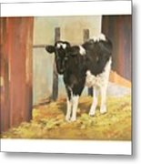 Holstein Calf Metal Print