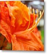 Home Decor Orange Rhodie Flower Art Print Baslee Troutman Metal Print