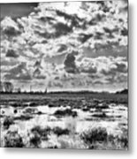 Home Is A Treeline Metal Print