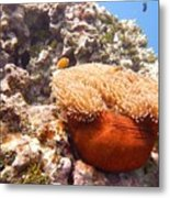 Home Of The Clown Fish 4 Metal Print