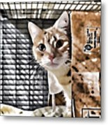 Homeless Cat Metal Print