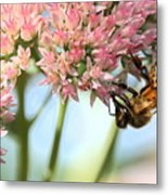 Honey Bee 2 Metal Print