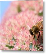 Honey Bee 3 Metal Print