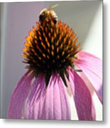 Honey Bee At Work Metal Print