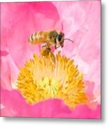 Honey Bee Collecting Pollen Metal Print
