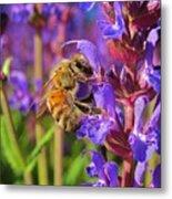 Honey Bee I Metal Print