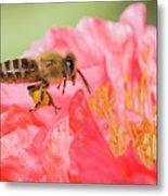 Honey Bee In Flight Metal Print